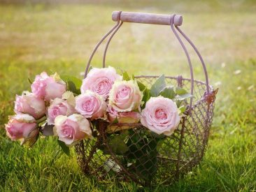 roses, flowers, basket