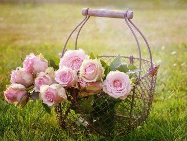 roses, flowers, basket